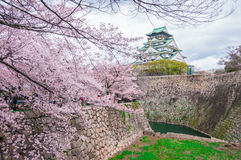 Osaka Castle. With cherry blossom Stock Images