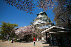 Osaka castle with cherry blossom at entrance gate Royalty Free Stock Photo