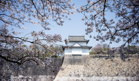 Osaka castle with cherry blossom focus at cherry flower. Osaka castle with cherry blossom focus at cherry blossom flower Stock Photos