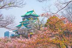 Osaka castle with cherry blossom. Japanese spring beautiful scen Royalty Free Stock Photo