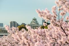 Osaka castle with cherry blossom in Osaka; Japan. Japan spring b. Eautiful scene Royalty Free Stock Photos