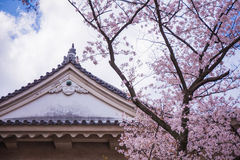 Osaka castle and cherry blossom Royalty Free Stock Photo