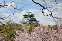 Osaka castle with the cherry blossoms Stock Photos