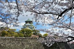 Osaka castle with the cherry blossoms Royalty Free Stock Photography