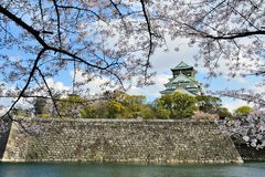 Osaka castle with the cherry blossoms Royalty Free Stock Photos