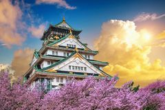 Osaka Castle e flor de cerejeira no por do sol na mola Estações de Sakura em Osaka, Japão imagens de stock
