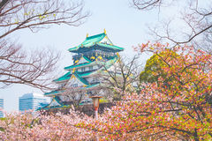 Osaka Castle, Japan. Cherry blossom in Osaka castle, Osaka, Japan Royalty Free Stock Photography