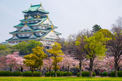 Osaka Castle, Japan. Cherry blossom in Osaka castle, Osaka, Japan Royalty Free Stock Image