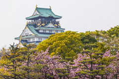 Osaka Castle in Japan under cherry blossom Stock Photo