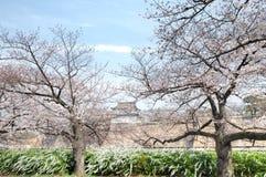 Osaka Castle Osakajo, Kyoto, Japan. Cherry blossom season at Osaka Castle Osakajo, Kyoto, Japan. The entire Osaka Castle Park covers about two square kilometers Stock Images