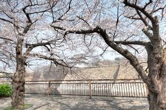 Osaka Castle Osakajo, Kyoto, Japan. Cherry blossom season at Osaka Castle Osakajo, Kyoto, Japan. The entire Osaka Castle Park covers about two square kilometers Royalty Free Stock Photos