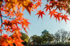 Osaka Castle Park. Is a public urban park and historical site situated at Osaka, Japan. The castle was built by Toyotomi Hideyoshi in year 1583. This park is Stock Photos