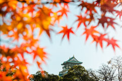 Osaka Castle Park. Is a public urban park and historical site situated at Osaka, Japan. The castle was built by Toyotomi Hideyoshi in year 1583. This park is Royalty Free Stock Photography