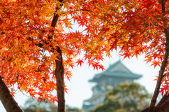 Osaka Castle Park. Is a public urban park and historical site situated at Osaka, Japan. The castle was built by Toyotomi Hideyoshi in year 1583. This park is Royalty Free Stock Images