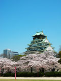 Osaka Castle with Sakura Royalty Free Stock Photo