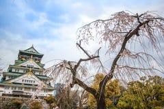 Osaka Castle and sakura blossom in osaka, Japan. royalty free stock images