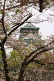 Osaka Castle Sakura. Osaka castle with cherry blossom. Japanese spring beautiful scene Royalty Free Stock Photos
