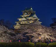 Osaka Castle Sakura royalty free stock image