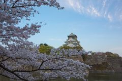 Osaka Castle und Kirschblüte in Osaka Lizenzfreies Stockfoto