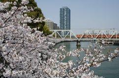 Osaka Cherry Blossoms Stock Image