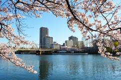 Osaka cityscape under vårsäsongen Royaltyfria Foton