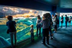 OSAKA, GIAPPONE - 18 LUGLIO 2017: Delfino in Osaka Aquarium Kaiyukan, uno di più grandi acquari pubblici nel mondo dentro Immagine Stock