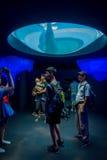 OSAKA, GIAPPONE - 18 LUGLIO 2017: Dolphing in Osaka Aquarium Kaiyukan Ring dell'acquario del fuoco, uno di più grande pubblico Fotografie Stock Libere da Diritti