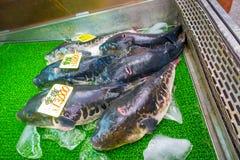 OSAKA, GIAPPONE - 18 LUGLIO 2017: Pesce o pesce palla giapponese di fugu in un mercato di Osaka, Giappone Fotografia Stock Libera da Diritti