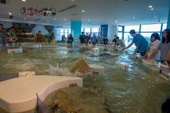 OSAKA, JAPÃO - 18 DE JULHO DE 2017: Povos não identificados que apreciam e que tocam nos animais de mar em uma área moderna em Ki Imagens de Stock Royalty Free