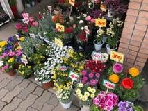 Osaka Japan - Februari 14, 2017: Sålda variationer av den lokala blomman Royaltyfria Foton
