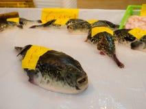 OSAKA, JAPAN - JULI 18, 2017: Fuguvissen in een markt in de markt van Kuromon Ichiba in Osaka, Japan het is marktplaatsen Stock Foto