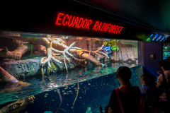 OSAKA, JAPAN - 18. JULI 2017: Nicht identifizierte Leute, welche die Ecuadorianfischart originative vom Ekuadorianer schauen Lizenzfreie Stockbilder