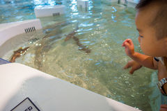 OSAKA JAPAN - JULI 18, 2017: Oidentifierat behandla som ett barn se havsdjuren i ett modernt område på det Kiyukan akvariet i Osa Royaltyfri Bild