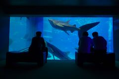 OSAKA, JAPAN - JULY 18, 2017: Shadow of tourists taking pictures and enjoying sea creatures at the Osaka Aquarium stock images