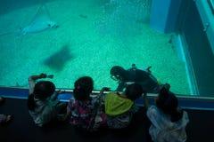 OSAKA, JAPAN - JULY 18, 2017: Unidentified children enjoying sea creatures and and looking at diver at Osaka Aquarium. Kaiyukan in Osaka, Japan royalty free stock image