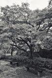 Japanese garden of Expo`70 commemorative park. Osaka, Japan - November 17, 2018: Japanese garden of Expo`70 commemorative park in autumn, shot in Osaka, Japan royalty free stock photo