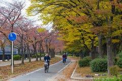 OSAKA, JAPAN - NOVEMBER 13.2015 Openbaar park in Osaka Castle in de rode Herfst met de Japanse bedrijfsmens op fietsrit aan het w Stock Foto's
