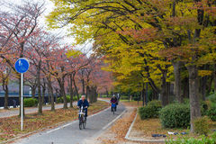 OSAKA, JAPAN - NOVEMBER 13,2015  Public park at Osaka Castle in red Autumn with Japanese business man on bicycle ride to work Stock Photos