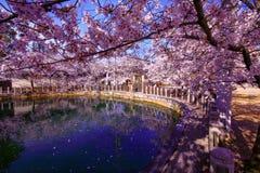 Osaka, Japan Tempel in Osaka in de lente, het bloeien seizoen, kersenbloesems stock foto's
