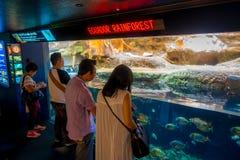 OSAKA, JAPON - 18 JUILLET 2017 : Personnes non identifiées regardant les espèces d'ecuadorian des poissons originative de l'équat Photographie stock libre de droits