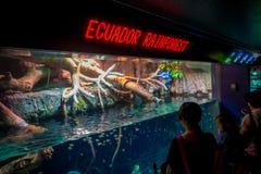 OSAKA, JAPON - 18 JUILLET 2017 : Personnes non identifiées regardant les espèces d'ecuadorian des poissons originative de l'équat Images libres de droits