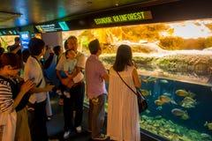 OSAKA, JAPON - 18 JUILLET 2017 : Personnes non identifiées regardant les espèces d'ecuadorian des poissons originative de l'équat Photographie stock