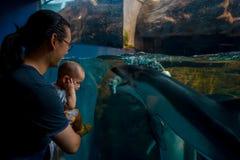 OSAKA JAPONIA, LIPIEC, - 18, 2017: Delfin w Osaka akwarium Kaiyukan, jeden wielcy jawni akwaria w świacie wewnątrz obraz stock