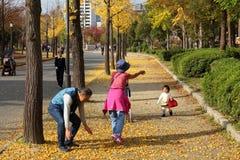 Osaka jesieni liście Zdjęcia Stock