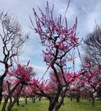 Osaka jo koen. Garden of Osaka Castle spring time Stock Photo