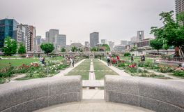 Free Osaka Nakanoshima Rose Garden Near Osaka City Hall Royalty Free Stock Photos - 123833898