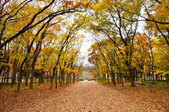 Osaka Park all'autunno Fotografia Stock Libera da Diritti