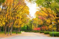Osaka Park på hösten Arkivfoto