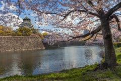 Osaka slott med de körsbärsröda blomningarna Royaltyfri Fotografi
