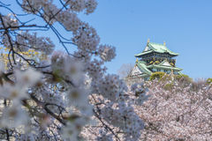 Osaka slott med de körsbärsröda blomningarna Arkivfoton